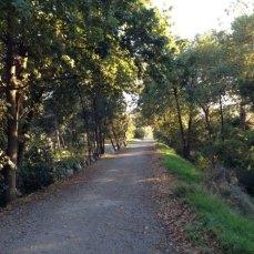 lilydale-to-warburton